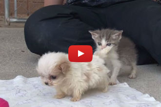 This Rescue Puppy and Kitten Meet for the First Time and You Won't Stop Smiling!