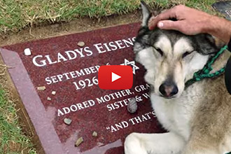 This Sad Therapy Dog Cries at His Dead Grandmother's Gravesite