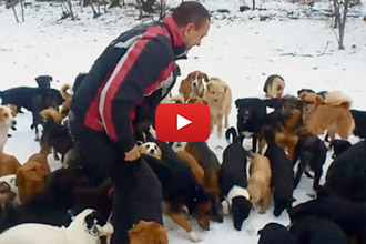 This Sanctuary Is Home To Over 450 Dogs That Were Once Homeless