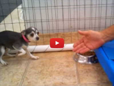 This Scared Puppy Mill Survivor Has Never Been Touched, Until Now...
