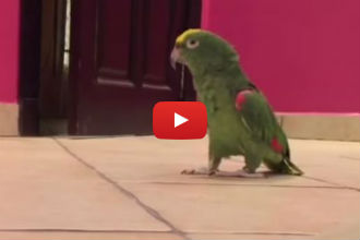 This Sneaky Bird Thinks He's Absolutely Hilarious - So Funny!