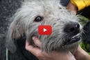 This Stray Dog Was Covered In Oil, And His Rescue Story Put Us In Tears!