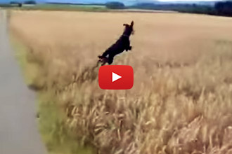 This Unbelievably Happy Dog Shows us the True Meaning of Joy!
