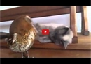 This Unique Friendship Will Make Heads Turn! This Cat and Owl Couple is too Cute!!