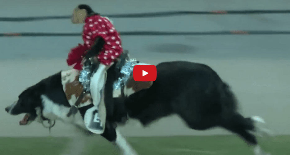 This Video of a Monkey Riding a Dog like a Horse is Oddly Satisfying!