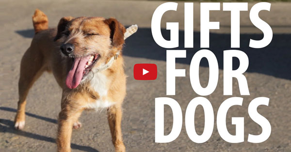 This Video of Homeless Dogs Receiving Gifts is Exactly What You Need! Absolutely Adorable!!