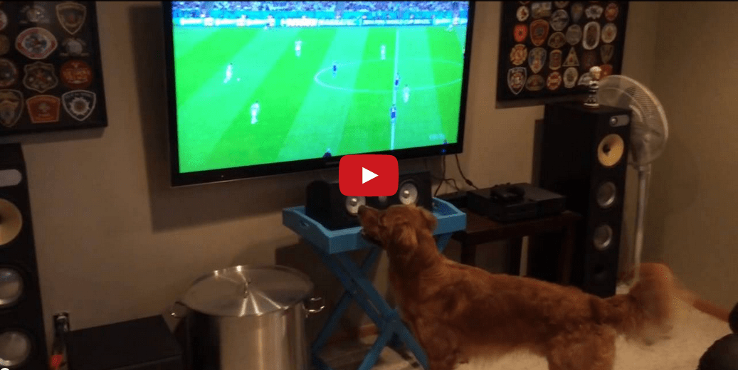 This Video of Two Dogs Watching the World Cup Summarizes America's Opinion on Soccer- And It's Hilarious!!