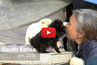 This Woman Has Devoted Her Life To Rescuing Dogs And It's Remarkable!
