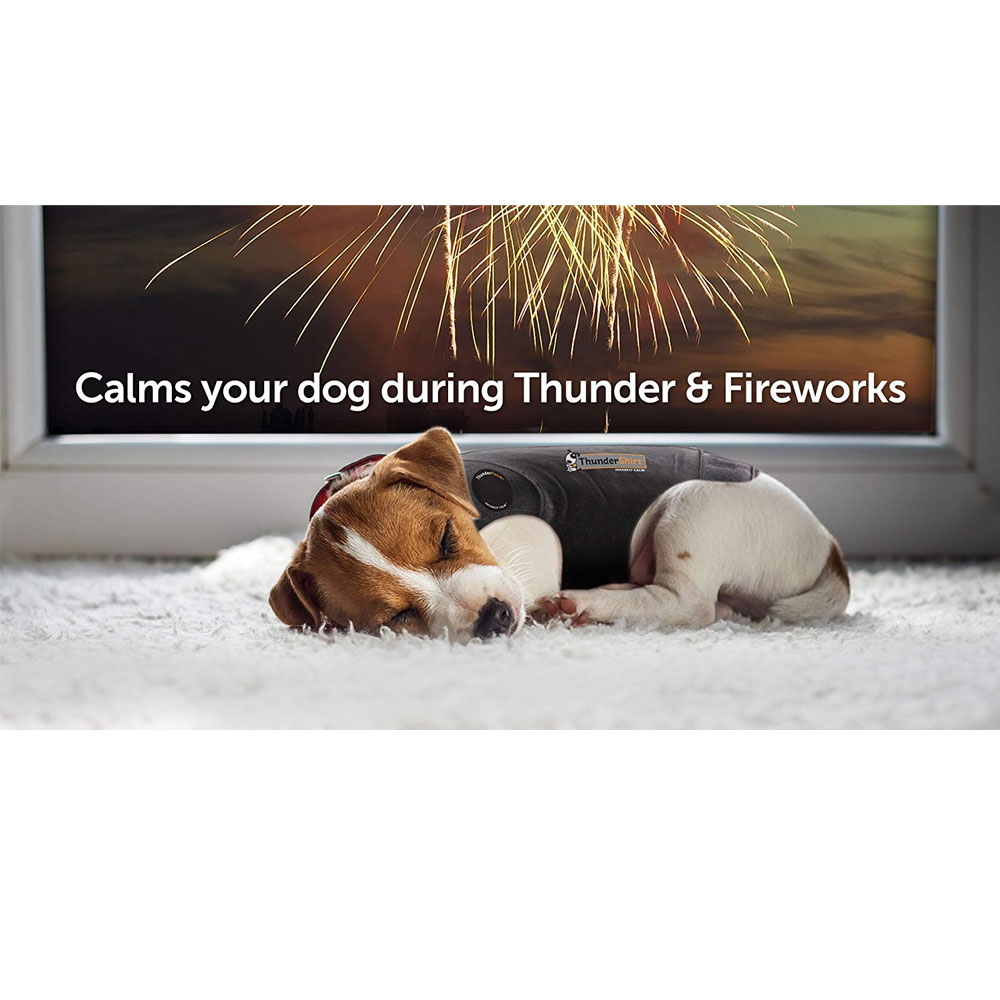 Sleeping beagle puppy wearing ThunderShirt in front of tv quote reading calms your dog during thunder & fireworks