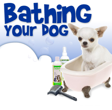 Tips for Bathing Your Dog