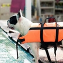 Tips To Keep Your Dog Safe In The Pool