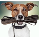 Top 10 Best Walking & Hiking Dog Products