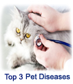 Top 3 Pet Diseases And Important Signs To Look For