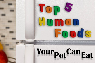 Top 5 Human Foods Your Pet Can Eat