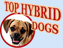 Top Hybrid Dogs