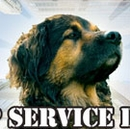 Top Service Dogs