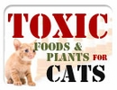 Toxic Foods & Plants for Cats