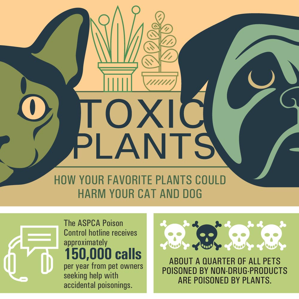 Toxic Plants - How Houseplants Can Harm Pets[infographic]