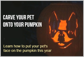 Turn Your Pet into a Cool Jack-o'-Lantern Design!