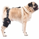 Universal Pet Therapy Wrap with Therapy Gel - Tarsal/Stifle (Small)