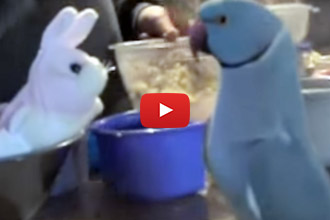 Wait Until You See How This Parrot Reacts To His New Friend
