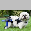 Walkin' Wheels for Handicapped Pets
