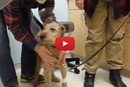 Watch How Happy He Is To See His Family After Getting His Eyesight Back!