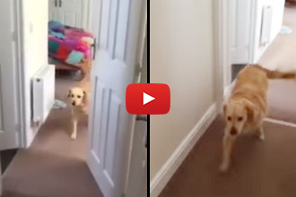 Watch How This Dog Reacts When His Owner Returns But He Can't Find Her!