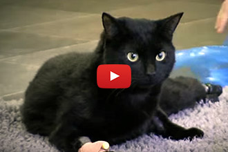 Watch Oscar the Cat Take His First Steps With His New Prosthetics