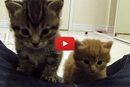 Watch These Kittens Adorably Respond To Their Foster Mom's Voice