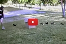 Watch these Kittens Prance in Formation from one Person to Another!