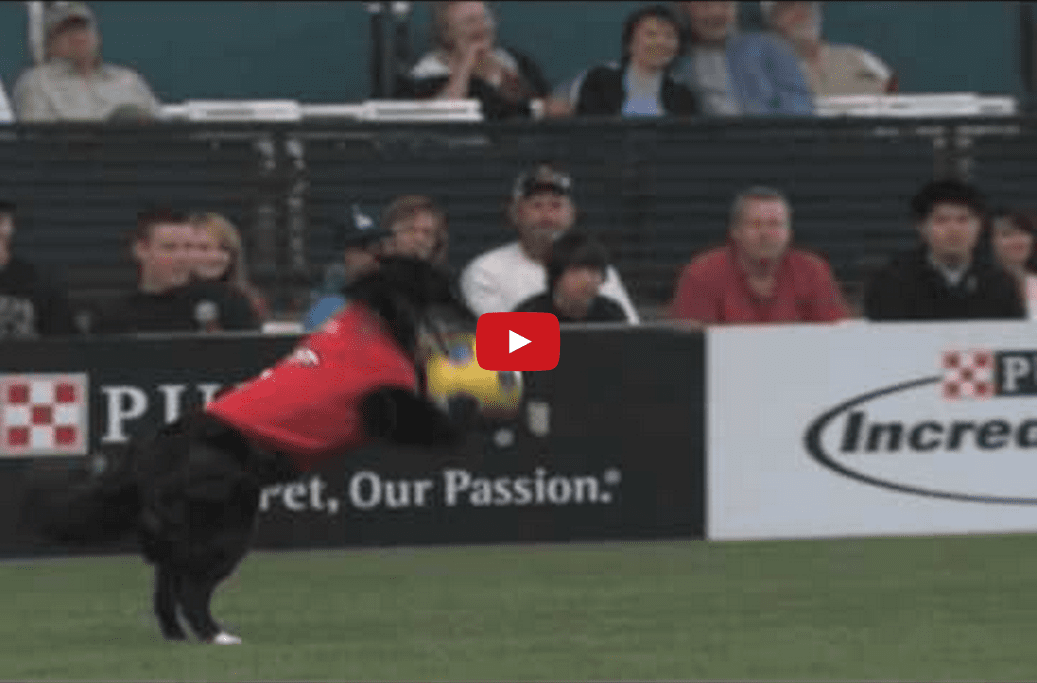 Watch These Talented Pooches Play Soccer Like Pros! They're So Talented- You Won't Believe Your Eyes!!