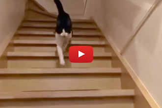 Watch This Adorable Cat Greet Its Owner Like an Excited Dog!