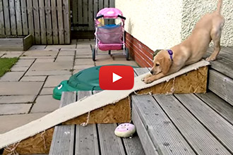 Watch this Adorable Puppy Act Just Like a Little Kid!