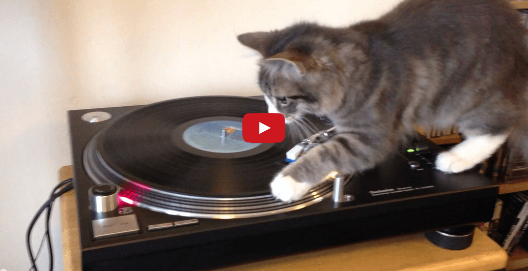 Watch This Cat Discover the Joys of Being A DJ! I Can't Stop Laughing!!