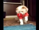 Watch This Cat Moonwalk to Michael Jackson Music! So EPIC!!
