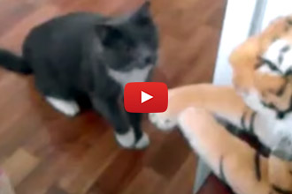 Watch This Cat Take On A Ferocious Household Intruder!