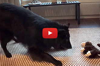Watch this Dog's Hilarious Reaction to This Monkey Toy