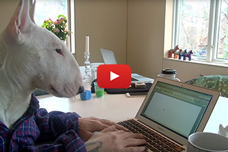 Watch This Dog Accurately Sum Up Working From Home