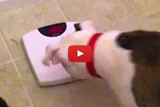 Watch This Dog Argue With The Number On The Scale After The Holiday!