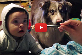 Watch This Dog Talk for a Treat!