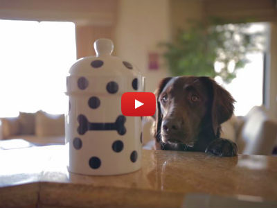 Watch This Dog Try to Steal Treats in This Epic Short Film! The Ending is Purrfect!