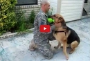 Watch This German Shepherd's Reaction to his Owner's Return Home After Deployment! You NEED to see this!