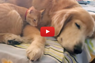 Watch This Kitten Grow Up With His Friend Koda