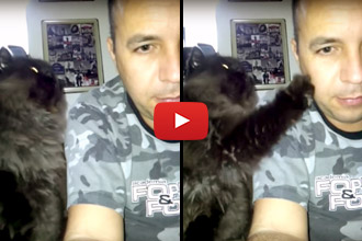 Watch This Kitty Adorably Demand To Be Pet!
