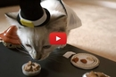 Watch This Kitty Celebrate Her First Thanksgiving!