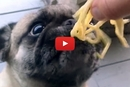 Watch This Pug Gobble Up These Noodles