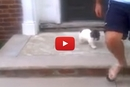 Watch This Puppy Hilariously Avoid The Stairs!