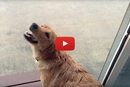 Watch this Puppy Play in the Rain For the First Time