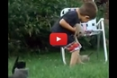 Watch This Sweet Little Kid Attempt To Round Up Kitties